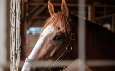 The Best CSMs Are Thoroughbreds Not Pack Horses